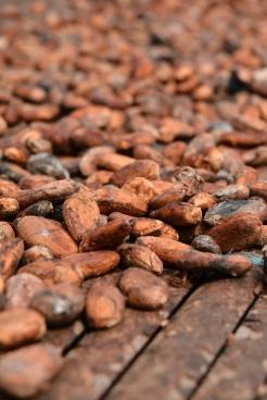 Chocolate blog (12)